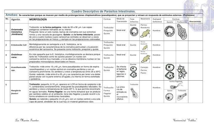 cuadro de parasitos intestinales