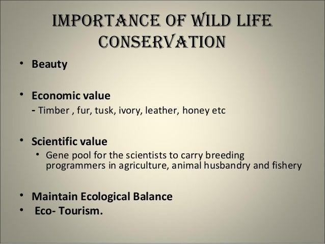 Essay On Wild Life Protection