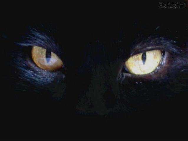 La plupart des gens pensent que les chats ne font rien, sontLa plupart des gens pensent que les chats ne font rien, sont p...