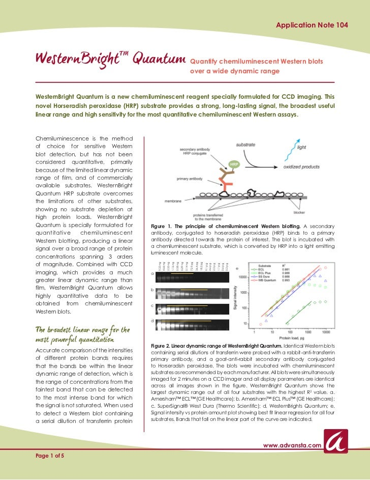 Application Note 104WesternBrightTM Quantum Quantify chemiluminescent Western blots                                       ...