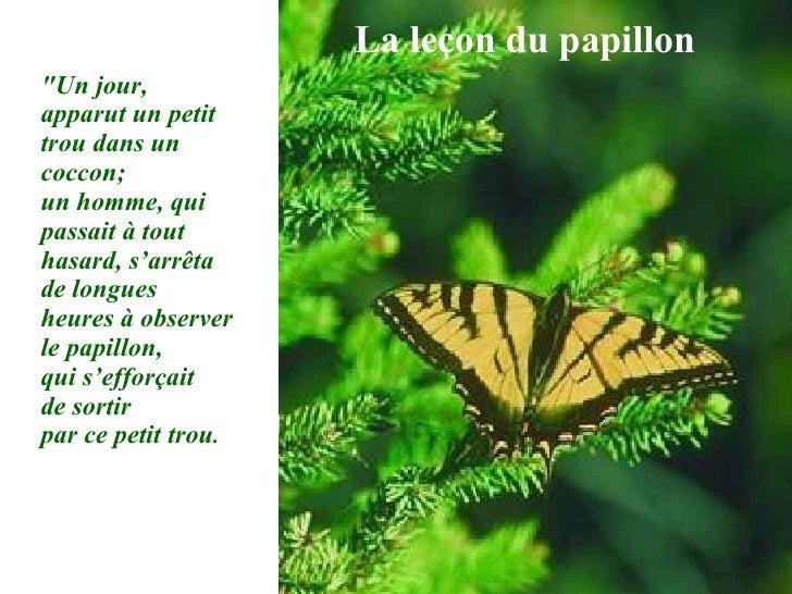 """La leçon du papillon """"Un jour, apparut un petit trou dans un coccon;  un homme, qui passait à tout hasard, s'arrêta d..."""
