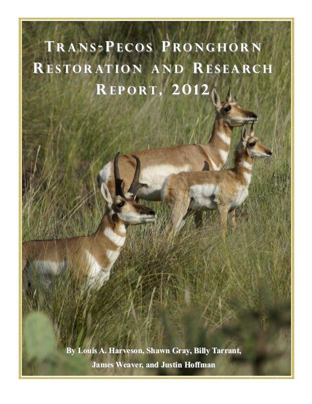 8987491 pronghorn research-report_2012_final_lah