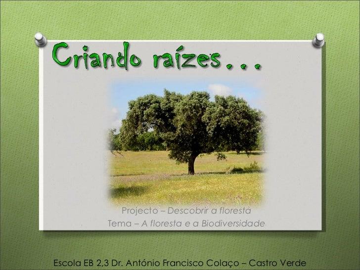 Projecto –  Descobrir a floresta Tema –  A floresta e a Biodiversidade Escola EB 2,3 Dr. António Francisco Colaço – Castro...