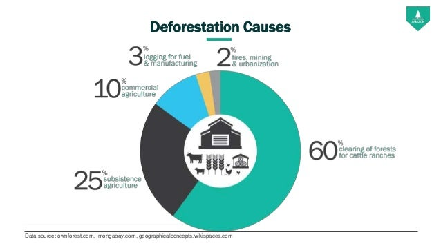 Deforestation Cause and Effects - Essay Samples