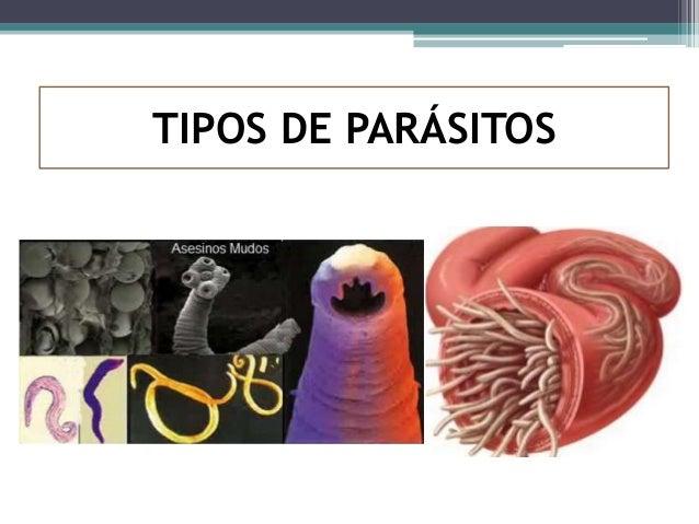 El clavel contra los parásitos como aceptar