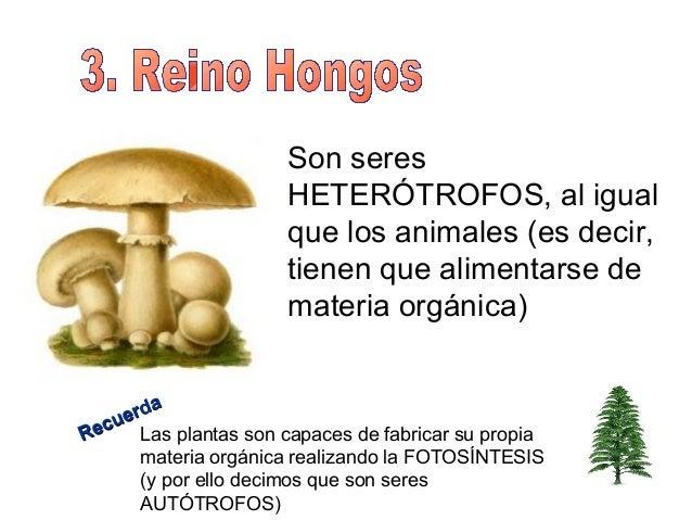 La mejor medicina contra el hongo del organismo
