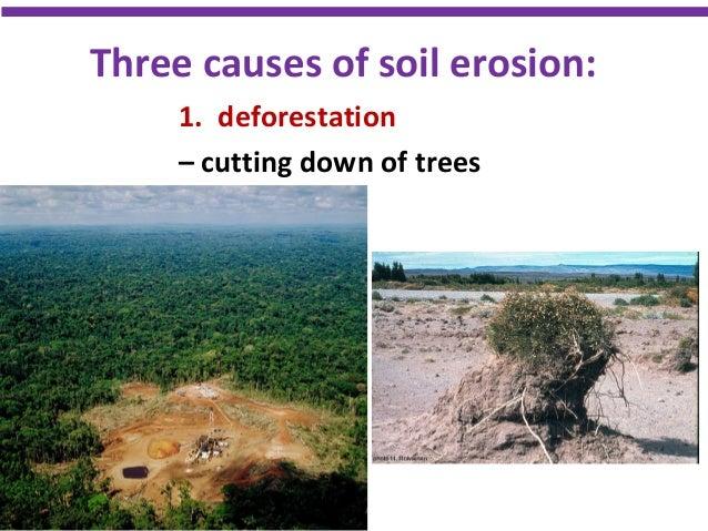 Biology form 4 chapter 9 9 1 endangered ecosystem for Soil erosion causes