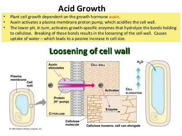 9.3 plant growth