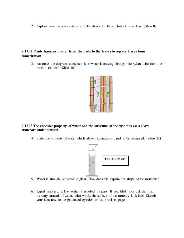9.1 transport in the xylem of plants worksheet