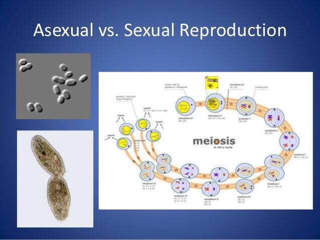the processes of mitosis and meiosis and sexually transmitted diseases