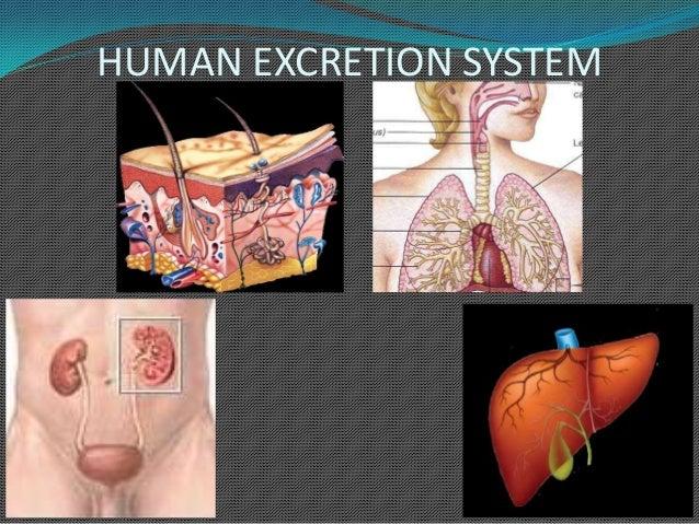 9 1. Human Excretion System