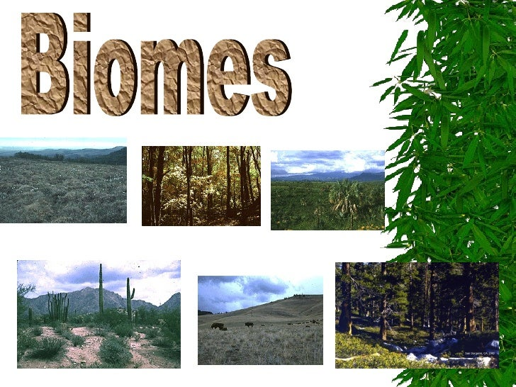 I. Biomes:areas that have  distinctive climates and   organisms