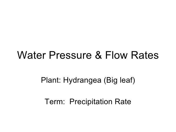 Water Pressure & Flow Rates Plant: Hydrangea (Big leaf) Term:  Precipitation Rate