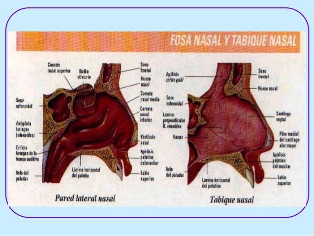 intranasal corticosteroids otc
