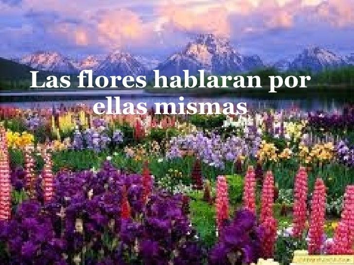 Las flores hablaran por ellas mismas