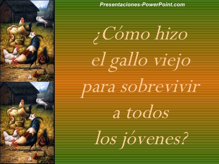 ¿Cómo hizo  el gallo viejo  para sobrevivir  a todos  los jóvenes?  Presentaciones-PowerPoint.com