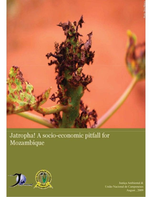 1 JA & UNAC, 2009 Jatropha! A socio – economic pitfall for Mozambique