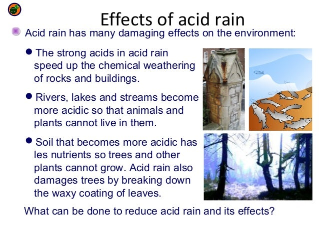 investigate the effect of acid rain The objective of this science fair project is to examine the effects of acid rain on the growth of marigold plants.