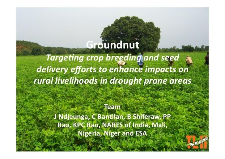 Groundnut    Targe&ngcropbreedingandseed  deliveryeffortstoenhanceimpactson rurallivelihoodsindroughtprone...