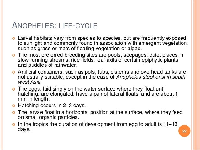 Cycle Anopheles Anopheles Life-cycle Larval