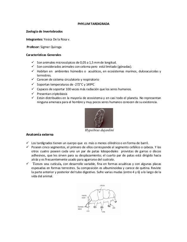 PHYLUM TARDIGRADA Zoología de Invertebrados Integrantes: Yesica De la Rosa v. Profesor: Sigmer Quiroga Características Gen...