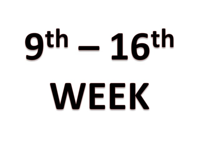 9th-16th week of pregnancy