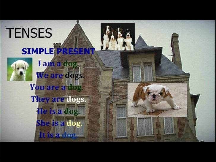 TENSES <ul><li>SIMPLE PRESENT </li></ul><ul><li>I am a  dog. </li></ul><ul><li>We are  dogs. </li></ul><ul><li>You are a  ...