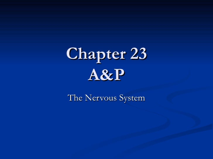 A&P Chapter 23 Nervous System