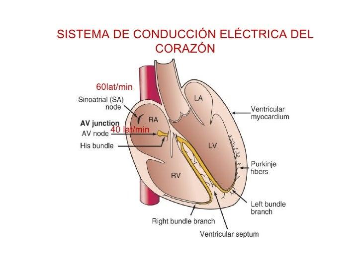 SISTEMA DE CONDUCCIÓN ELÉCTRICA DEL CORAZÓN 60lat/min 40 lat/min