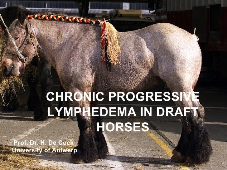 CHRONIC PROGRESSIVE LYMPHEDEMA IN DRAFT HORSES Prof. Dr. H. De Cock  University of Antwerp