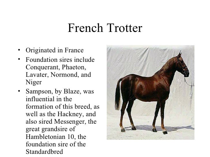 how to tell the difference between horse breeds