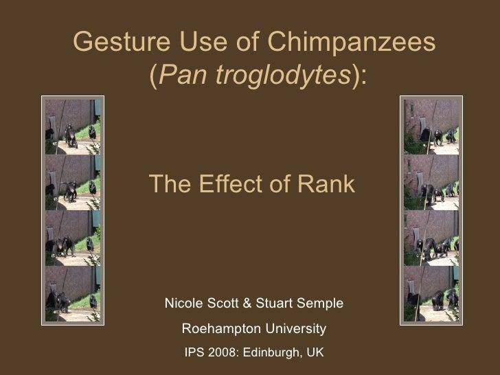 The Effect of Rank Nicole Scott & Stuart Semple Roehampton University IPS 2008: Edinburgh, UK Gesture Use of Chimpanzees  ...