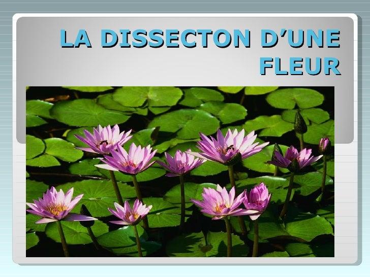 LA DISSECTON D'UNE FLEUR