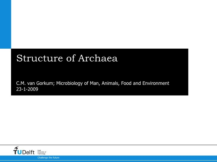 Structure of Archaea What makes them so unique compared to bacteria and eukaryotes? C.M. van Gorkum; Microbiology of Man, ...