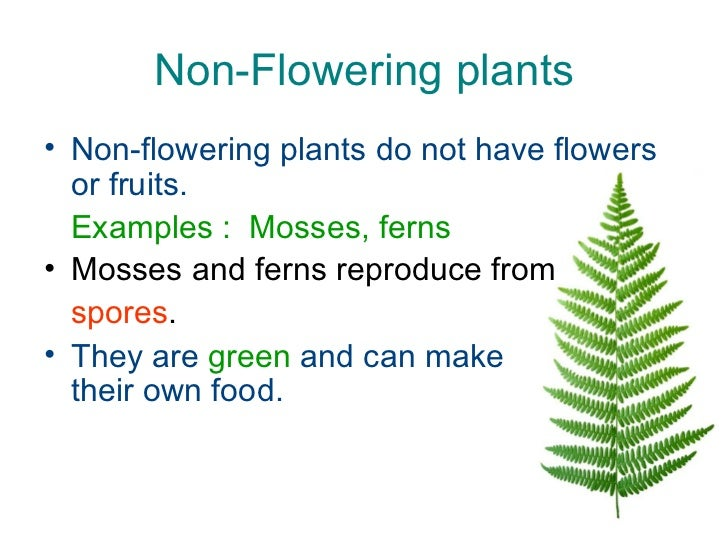 Do Flowers Make Their Own Food