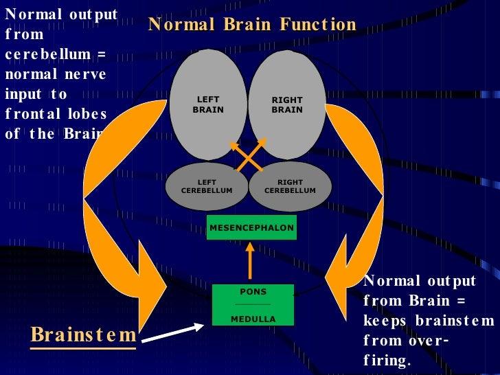 Brain Normal Function Normal Brain Function Normal