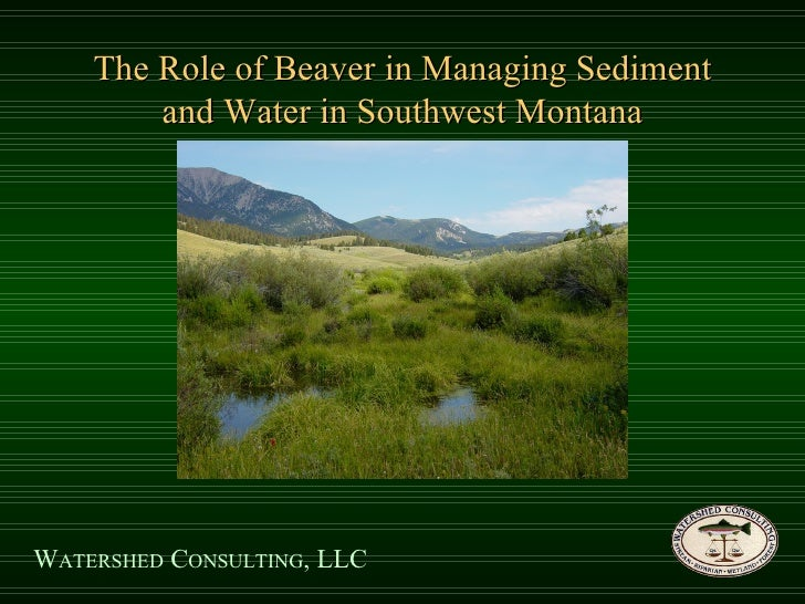 The Role of Beaver in Managing Sediment and Water in Southwest Montana W ATERSHED  C ONSULTING , LLC