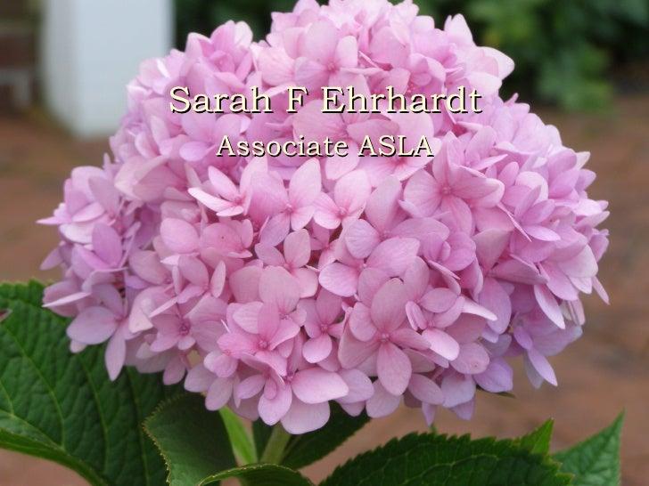 Power point - Sarah F Ehrhardt