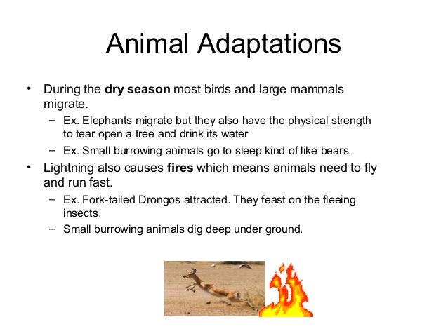 Animal Adaptations • During