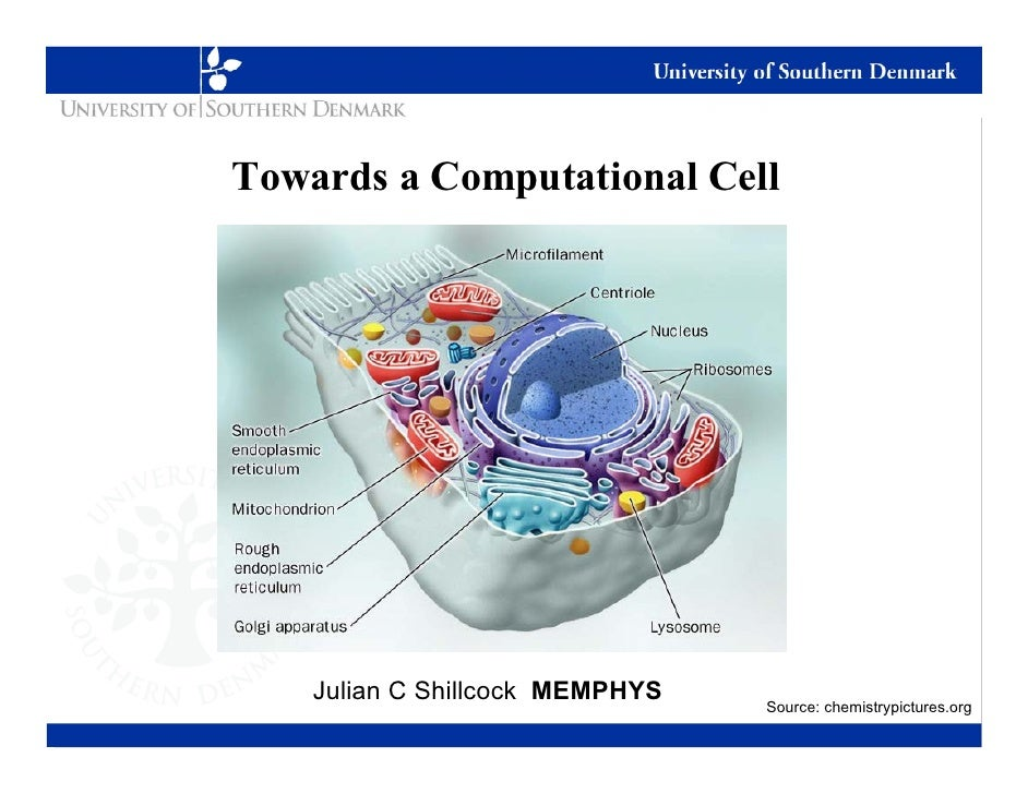 Computational Modeling of Biophysical Processes in a Cell