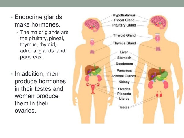 male sex hormones include high levels of