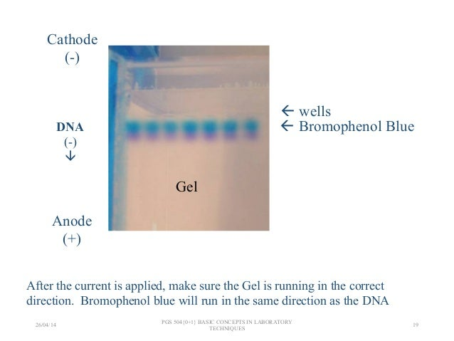 gel electrophoresis lab write up Abstract gel electrophoresis is a method that separates molecules the two fragments that made up the doublet would be the 1,080 bp electrophoresis lab.