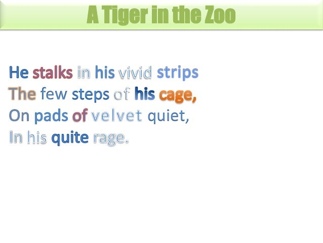 A Tiger in the Zoo  quiet,