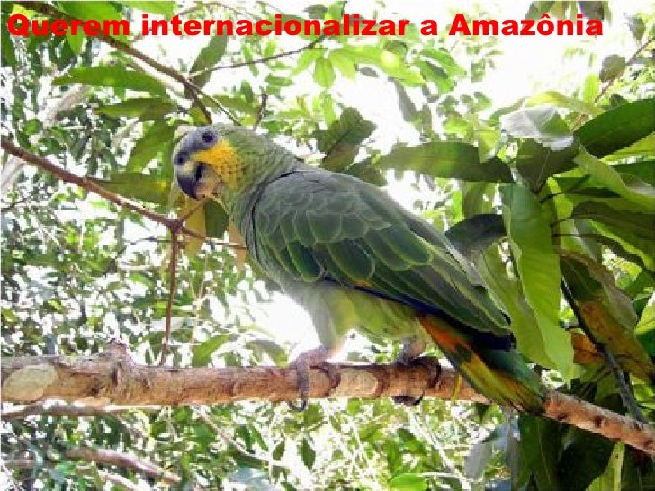 A Amazônia é do Brasil