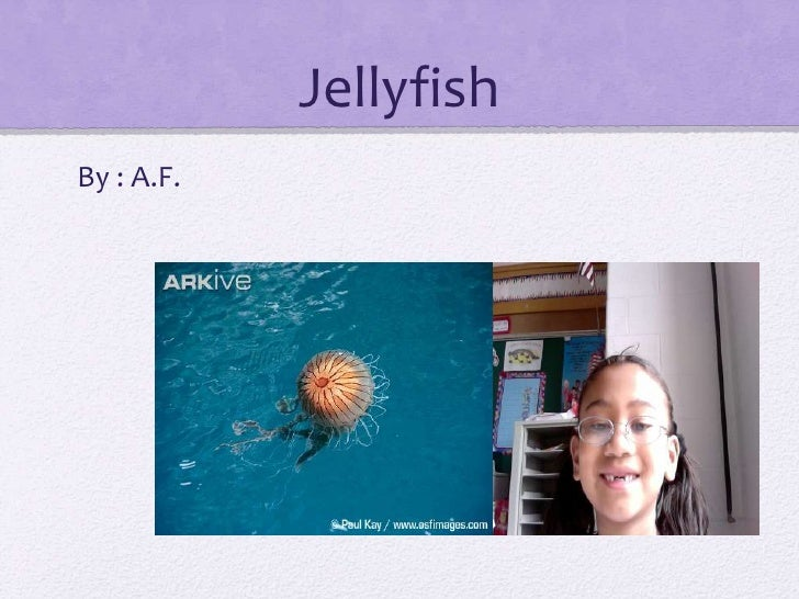 Jellyfish <br />By : A.F.<br />
