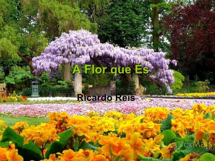 A Flor que És Ricardo Reis