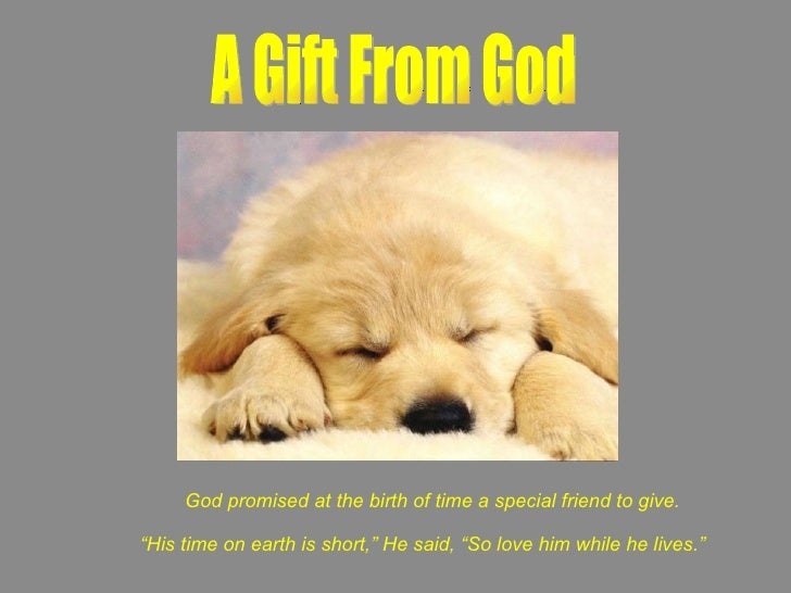 "A Gift From God God promised at the birth of time a special friend to give. "" His time on earth is short,"" He said, ""So lo..."
