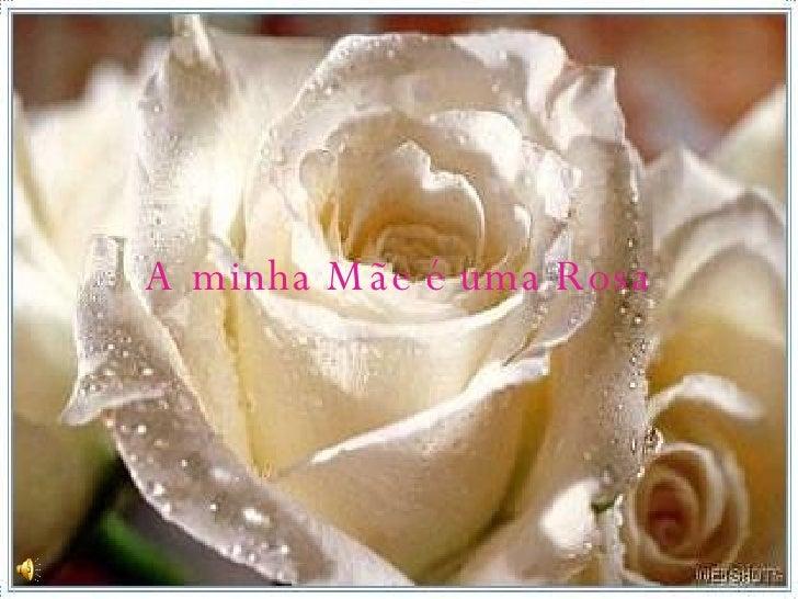 minha Mãe é uma Rosa