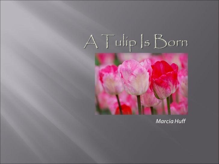 Marcia Huff