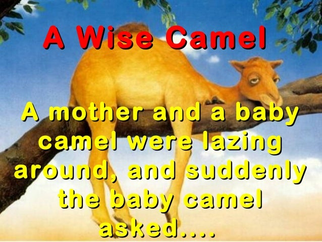 A Wise CamelA Wise CamelA mother and a babyA mother and a babycamel were lazingcamel were lazingaround, and suddenlyaround...